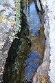 Montezuma Well - 37782759795.jpg