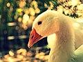 Mother Goose (5948634714).jpg
