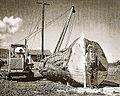 Mount Emily Lumber Company-2.jpg