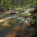 Mountain river in the forest.jpg