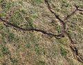 Myší kanálky v trávě.JPG