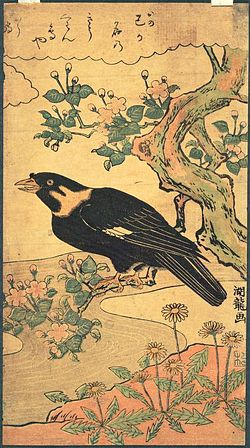 meaning of myna