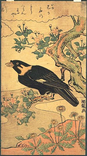 Myna - Myna perched in a flowering tree, Nishiki-e (color woodblock print) by Isoda Koryusai, c. 1775.