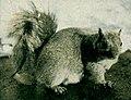 NSRW Squirrel (color).jpg