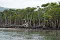 Nakama River Iriomote Okinawa Japan04s3.jpg
