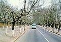 Nankín 1978 02.jpg