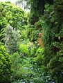 Napier botanical gardens shot 1.jpg