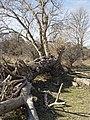 Nationaal Park Kennemerland (39560807810).jpg