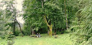 Skole Raion - Image: National Park Skole Beskids. Place of rest