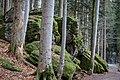 Nationalpark Bayerischer Wald 2.jpg