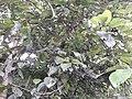 Nature20170724 163318.jpg