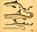 Naturgeschichte in Bildern mit erläuterndem Text (Taf. III) (6058654959).jpg