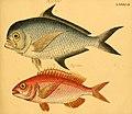 Naturgeschichte in Bildern mit erläuterndem Text (Taf. XCII) (6058673719).jpg
