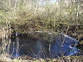 Naturschutzgebiet Riedwiese (4).jpg