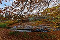 Netherlands Open Air Museum - 2020-10-31 - View on Zaanse Buurt in Autumn.jpg