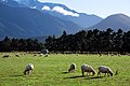 New Zealand - Rural landscape - 9795.jpg