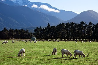 Agriculture in New Zealand - Rural landscape with sheep