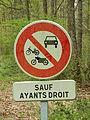 Nogent-sur-Vernisson-FR-45-forêt des Barres-a4.jpg