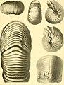 Nova Guinea - résultats de l'expédition scientifique néerlandaise à la Nouvelle-Guinée en 1903(-1920) (1913) (14778359165).jpg