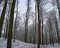 Nsg klepelshagen winter.jpg