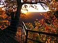 Oak - panoramio (9).jpg