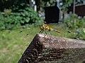 Odonata on Włocławek cemetery (2).jpg