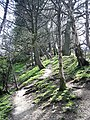 Offa's Dyke - long distance footpath - geograph.org.uk - 1816648.jpg