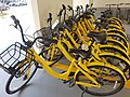 Ofo bicycles in Singapore.jpg