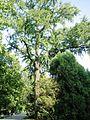 Ogród Strzelecki park w Tarnowie, ul. Piłsudskiego, Słowackiego (-) 4 pavw..JPG