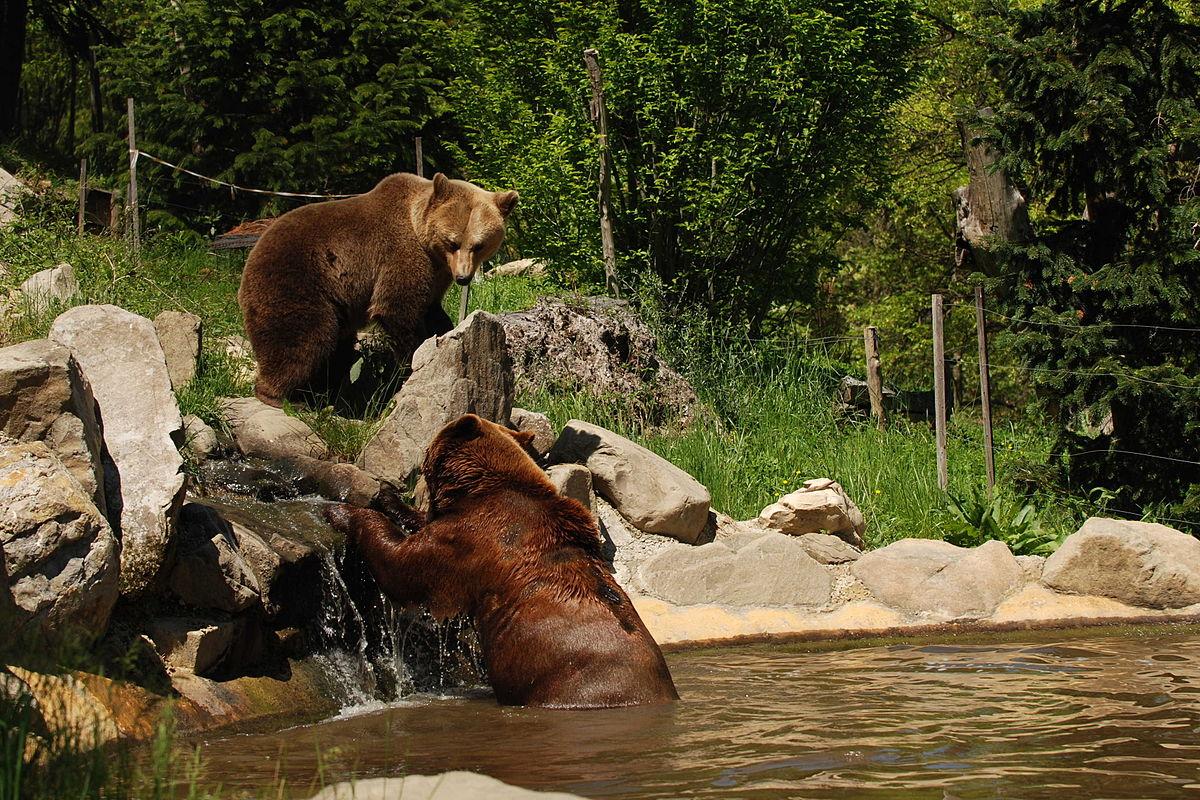 Zoo di Pistoia - Wikipedia