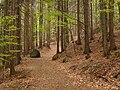 Oldřichovská vrchovina, sever, bučina 05.jpg