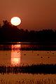 Orange sunset at Sacramento National Wildlife Refugeo.jpg