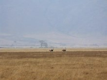 File: Ostrich running.ogv
