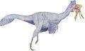 Oviraptor Shuvuuia.jpg