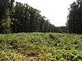 Přírodní park Škvorecká obora-Králičina - lesy východně od sídliště Rohožník a severně od Květnické studánky (2).JPG