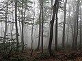 Padis forest 02.jpg