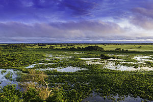 Pantanal, Mato Grosso, Brasil.jpg