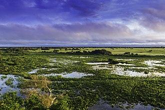 Pantanal - Landscape