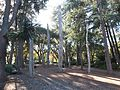 Papua New Guinea Sculpture Garden at Stanford University, central area 1.jpg