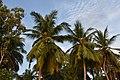 Paradise Resort, Kumbakonam (14) (37464100872).jpg