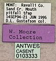 Paratrechina parvula casent0103333 label 1.jpg
