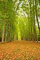 Park of Versailles 03.jpg