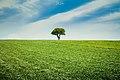 Pema e vetmuar.jpg