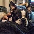 Penny - Flickr - Hub☺.jpg