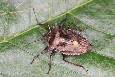 a forest bug