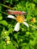 Petit papillon sur fleur.jpg
