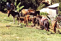 Horses in Maubisse small.jpg