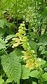 Pflanze Alpen 1.jpg