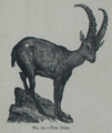 Picture Natural History - No 71 - The Ibex.png