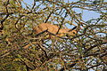 PikiWiki Israel 40545 Wildlife and Plants of Israel.JPG